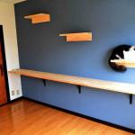 猫咪公寓入住送猫