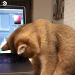 加班工作,猫皇陪伴,太暖心了啦!